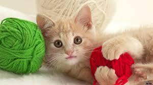 Kitten Knittin'